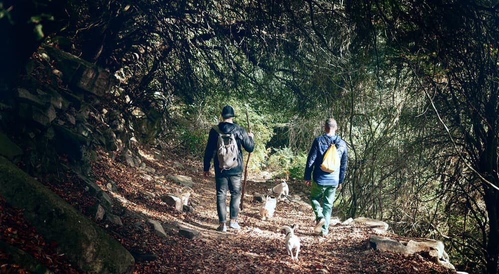 Two people are walking with their four dogs through a wooded hiking trail near Albany, NY.
