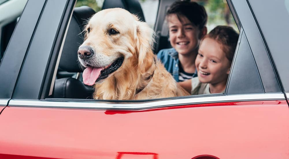 A smiling Golden Retriever has his head out the window of a car while smiling kids pet him.