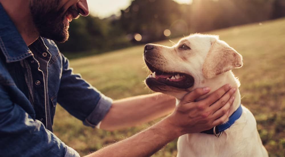 A white lab dog is happy while his new owner is petting him in an Albany, NY park.