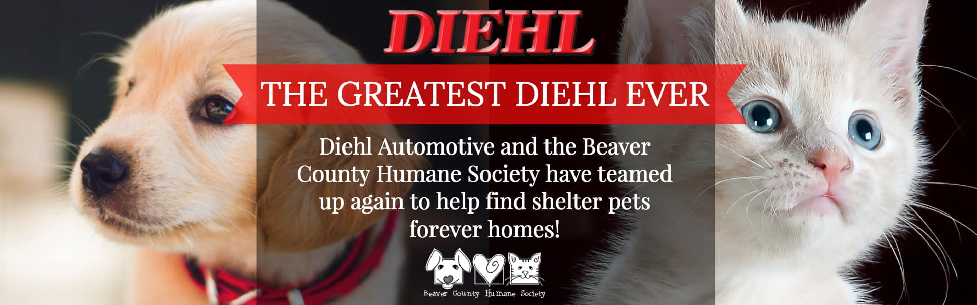 greatest diehl ever diehl automotive beaver county humane society adoption pet rescue dog cat bunny puppy kitty save shelter