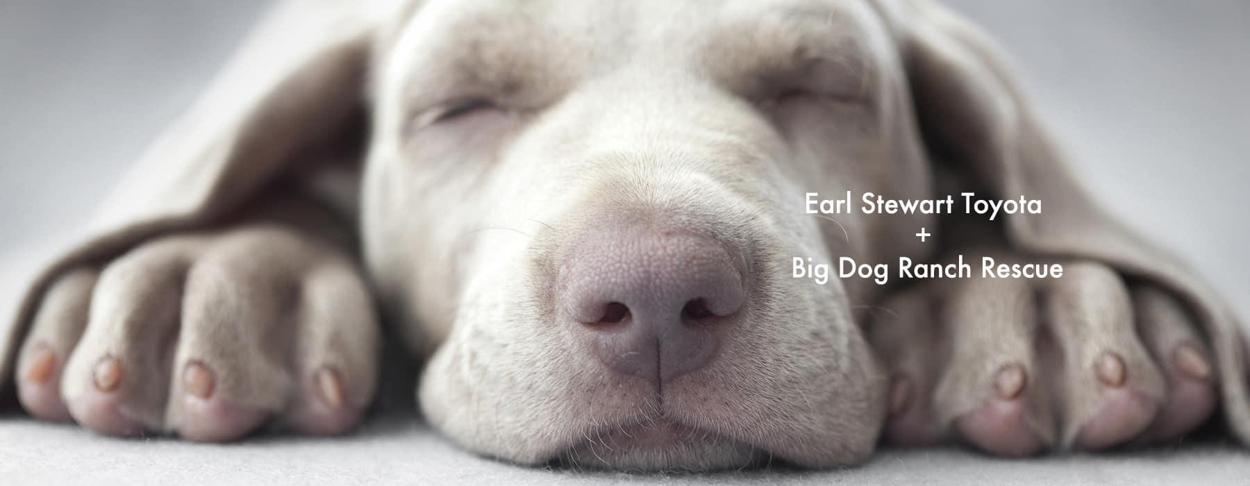 big dog ranch rescue earl stewart toyota