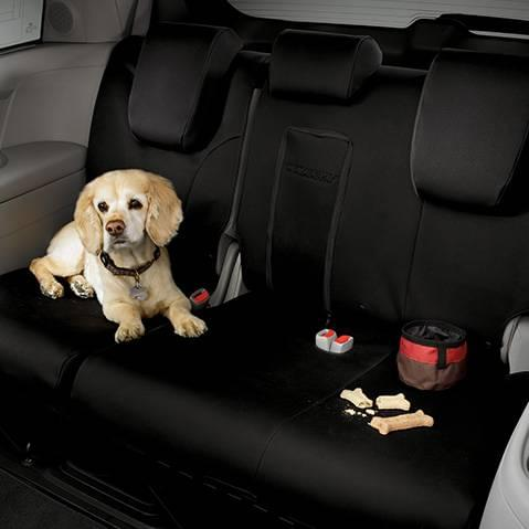 We Are A Dog Friendly Store with Many Dog Friendly Cars
